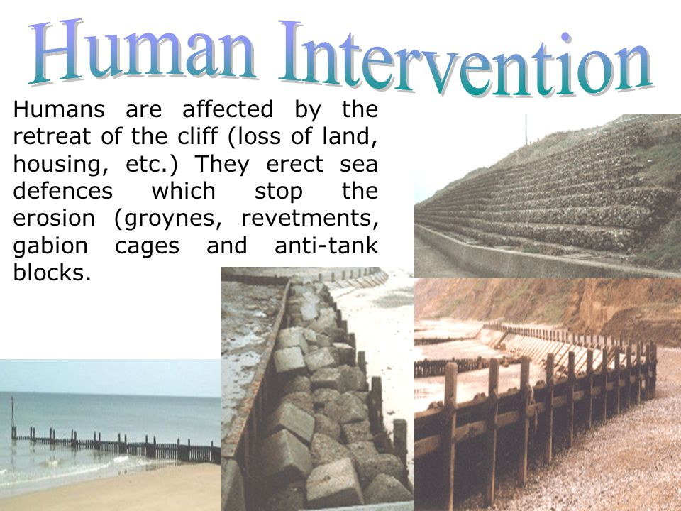 Humans are affected by the retreat of the cliff (loss of land, housing, etc.) They erect sea defences which stop the erosion (groynes, revetments, gabion cages and anti-tank blocks.