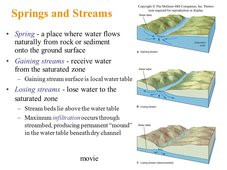 Springs and Streams Spring - a place where water flows naturally from rock or sediment onto the ground surface Gaining streams - receive water from the saturated zone –Gaining stream surface is local water table Losing streams - lose water to the saturated zone –Stream beds lie above the water table –Maximum infiltration occurs through streambed, producing permanent mound in the water table beneath dry channel movie