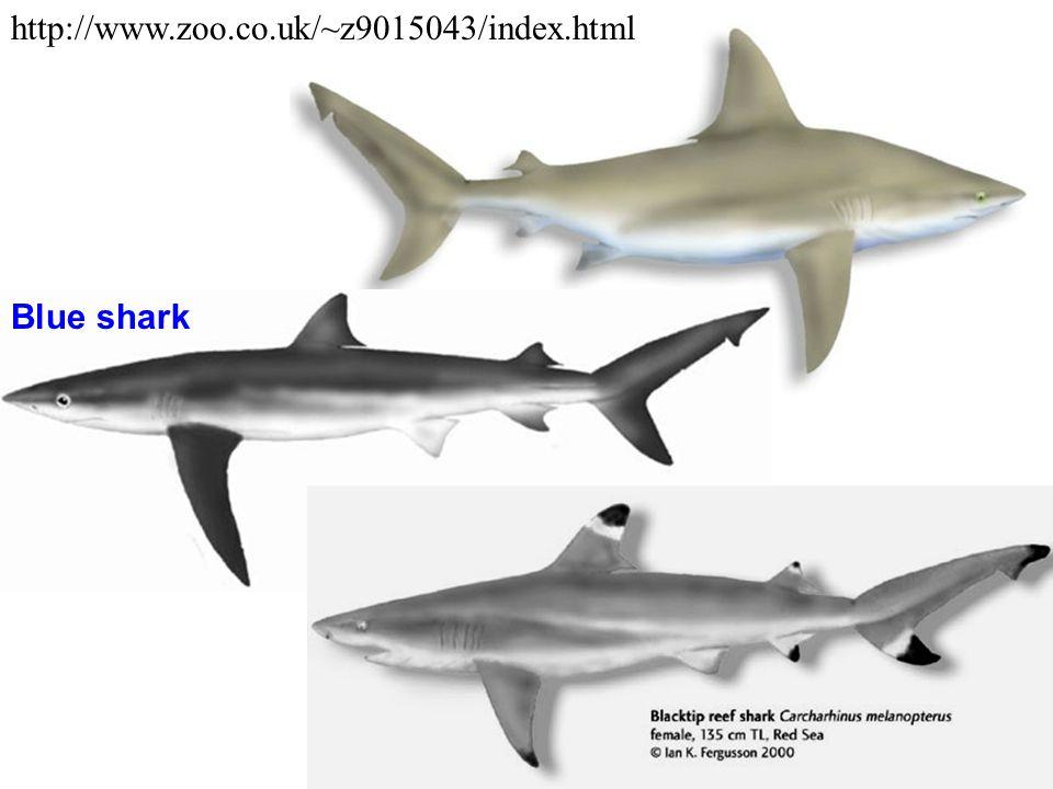 http://www.zoo.co.uk/~z9015043/index.html Blacktip reef shark Blue shark
