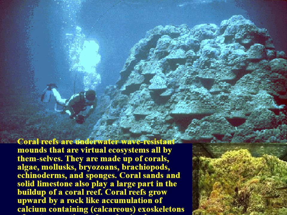 Coral reefs are underwater wave-resistant mounds that are virtual ecosystems all by them-selves.