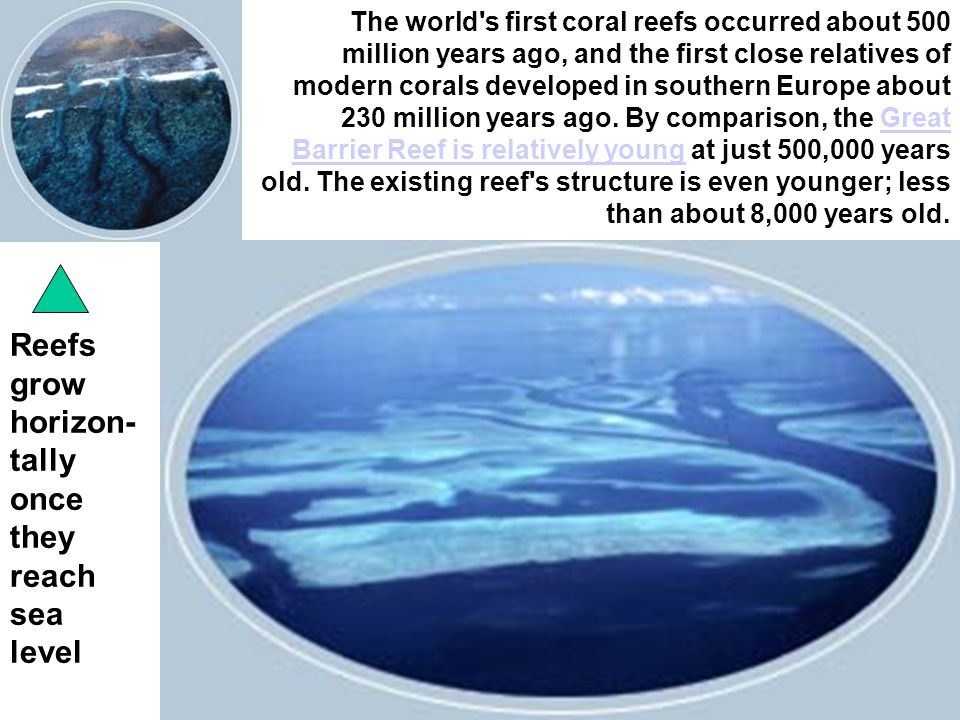 The world s first coral reefs occurred about 500 million years ago, and the first close relatives of modern corals developed in southern Europe about 230 million years ago.