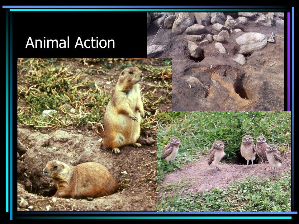 Animal Action