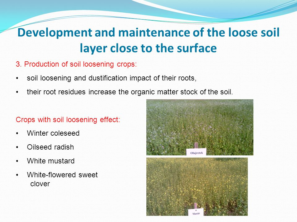 Development and maintenance of the loose soil layer close to the surface 3.