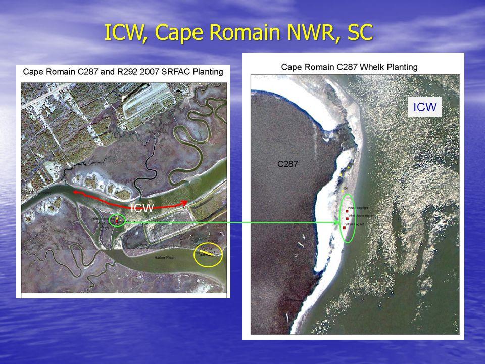 ICW, Cape Romain NWR, SC ICW