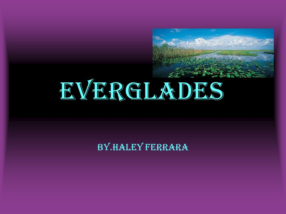 Everglades By.Haley Ferrara