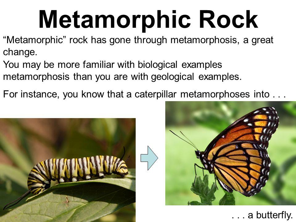 "Metamorphic Rock ""Metamorphic"" rock has gone through metamorphosis, a great change. You may be more familiar with biological examples metamorphosis th"