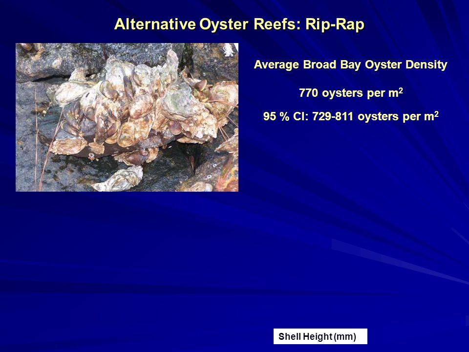 Alternative Oyster Reefs: Rip-Rap Average Broad Bay Oyster Density 770 oysters per m 2 95 % CI: 729-811 oysters per m 2 Shell Height (mm)