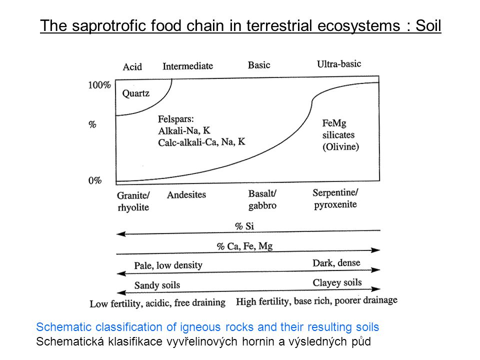 The saprotrofic food chain in terrestrial ecosystems : Soil Soil development on sand (above) and loess (below) according to Mückenhausen (1975) Vývoj půdy na písku (nahoře) a spraši (dole) podle Mückenhausena (1975) Brown earth Illimerized soil Raw sand Podsolized brown forest soil Weak podsol Moderate podsol Strong podsol Raw humus Humous sand Bleached sand ironpan Rustbrown sand (with iron hydroxide) Yellow-grey sand