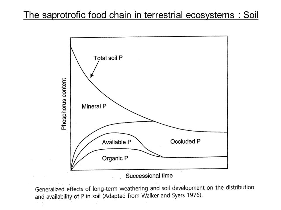 The saprotrofic food chain in terrestrial ecosystems : Soil Terra fusca on limestone Laterite Terra rosa on limestone Crust Red Zone Freckled Zone Decomposition Zone Substrate Soils of warm climates (incl.
