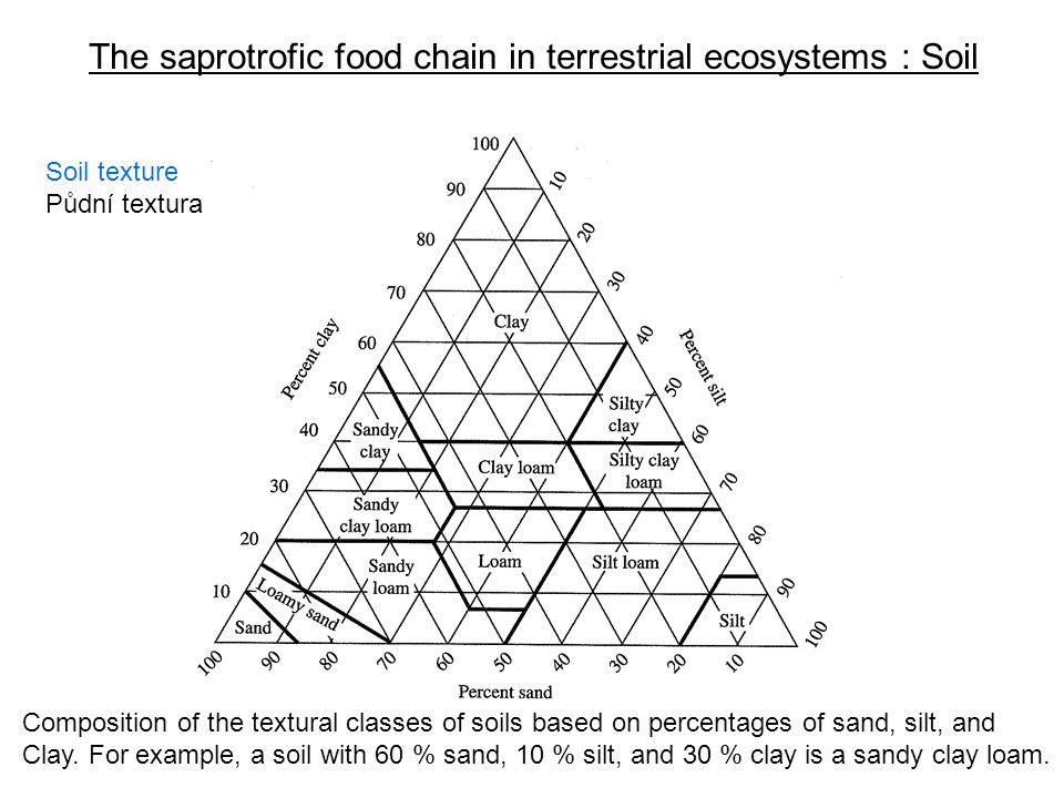 The saprotrofic food chain in terrestrial ecosystems : Soil