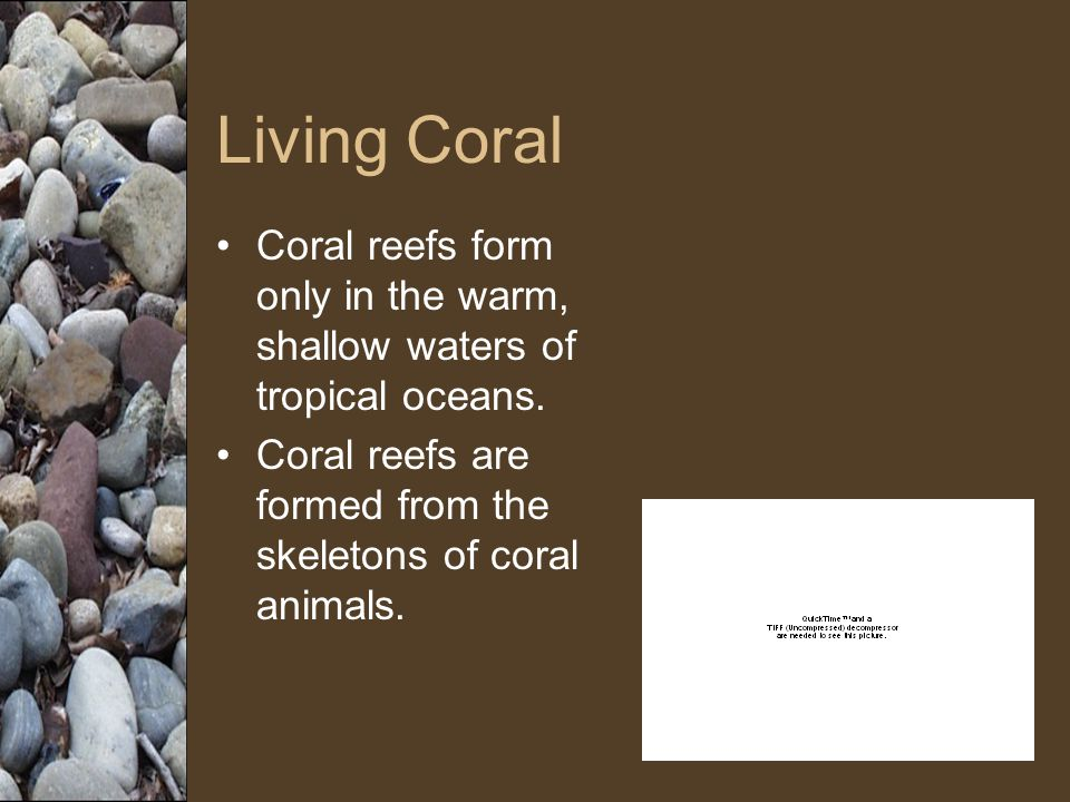 Living Coral Coral reefs form only in the warm, shallow waters of tropical oceans. Coral reefs are formed from the skeletons of coral animals.
