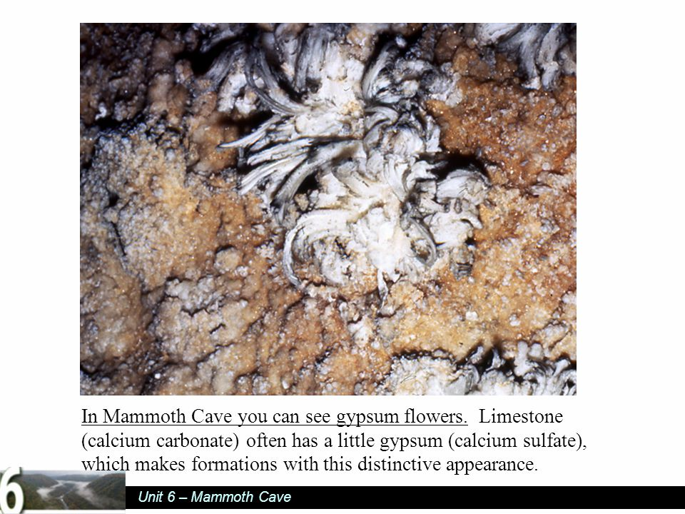 Unit 6 – Mammoth Cave In Mammoth Cave you can see gypsum flowers.