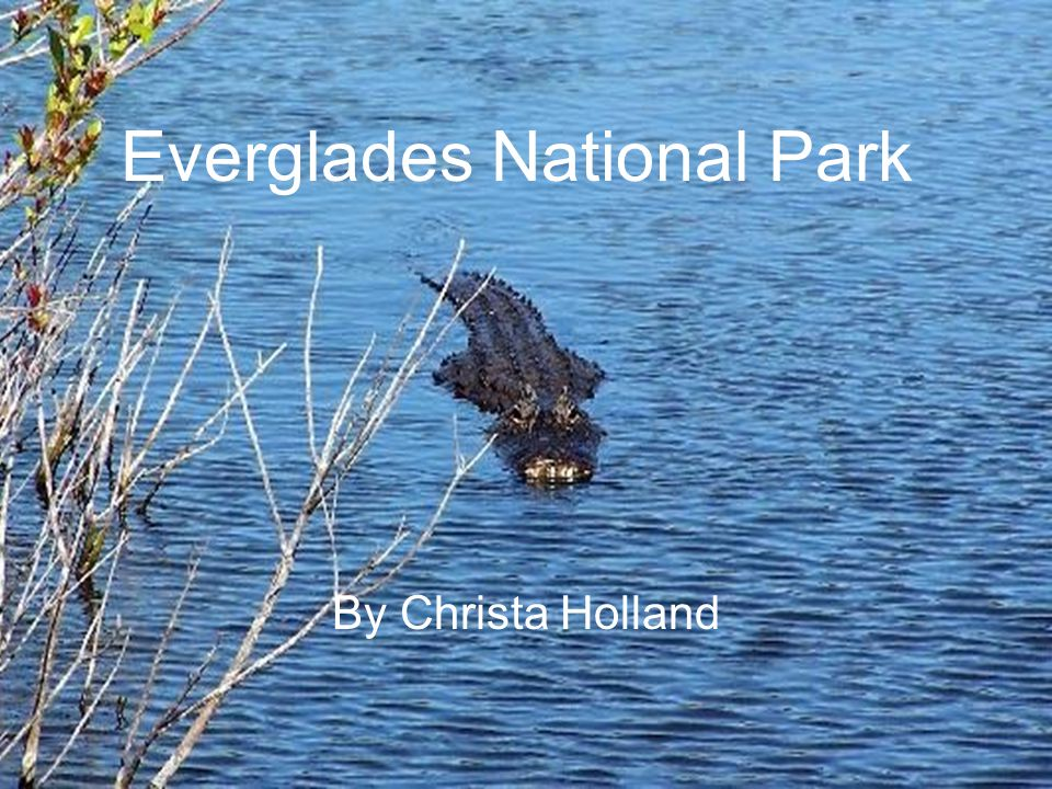 Everglades National Park By Christa Holland
