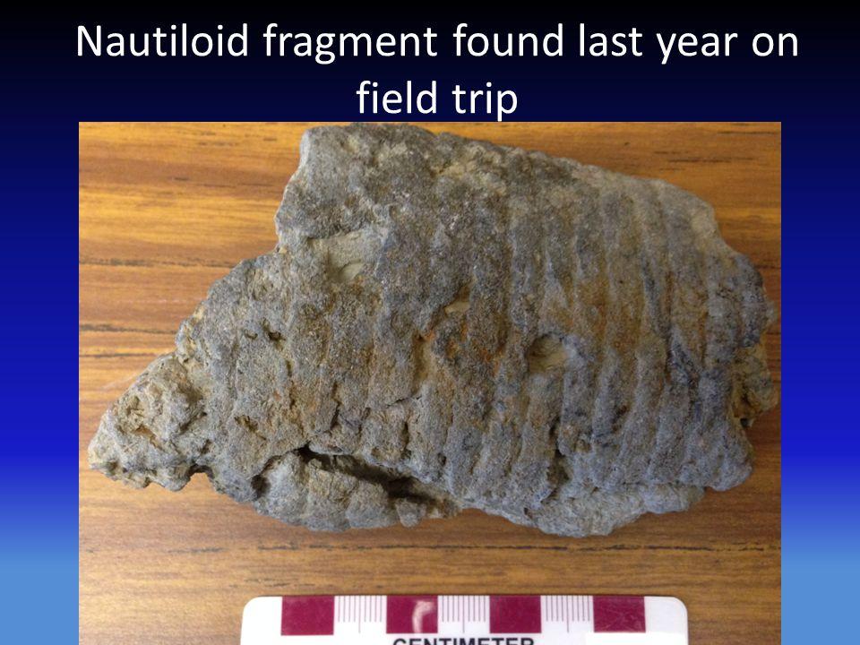Nautiloid fragment found last year on field trip