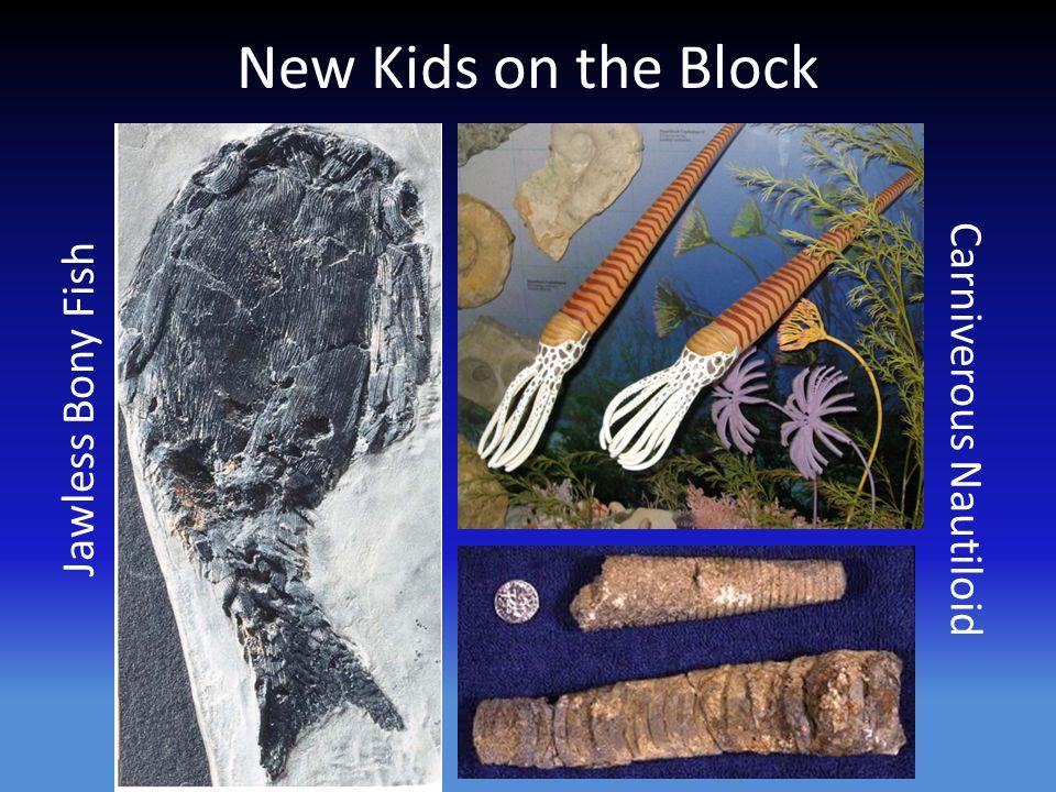 New Kids on the Block Jawless Bony Fish Carniverous Nautiloid