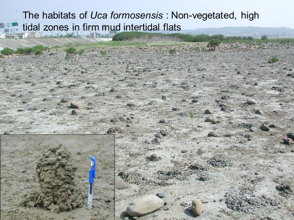 Life history stage Zoea and Megalop stage Spread/distribution Juvenile Feeding/ growth Adult Burrowing/ breeding Competition between fauna Aspect of organism Micro- habitat Temperature, humidity, sediment salinity, oxygen content, water content, quantity and quality of food, toxic materials, etc.