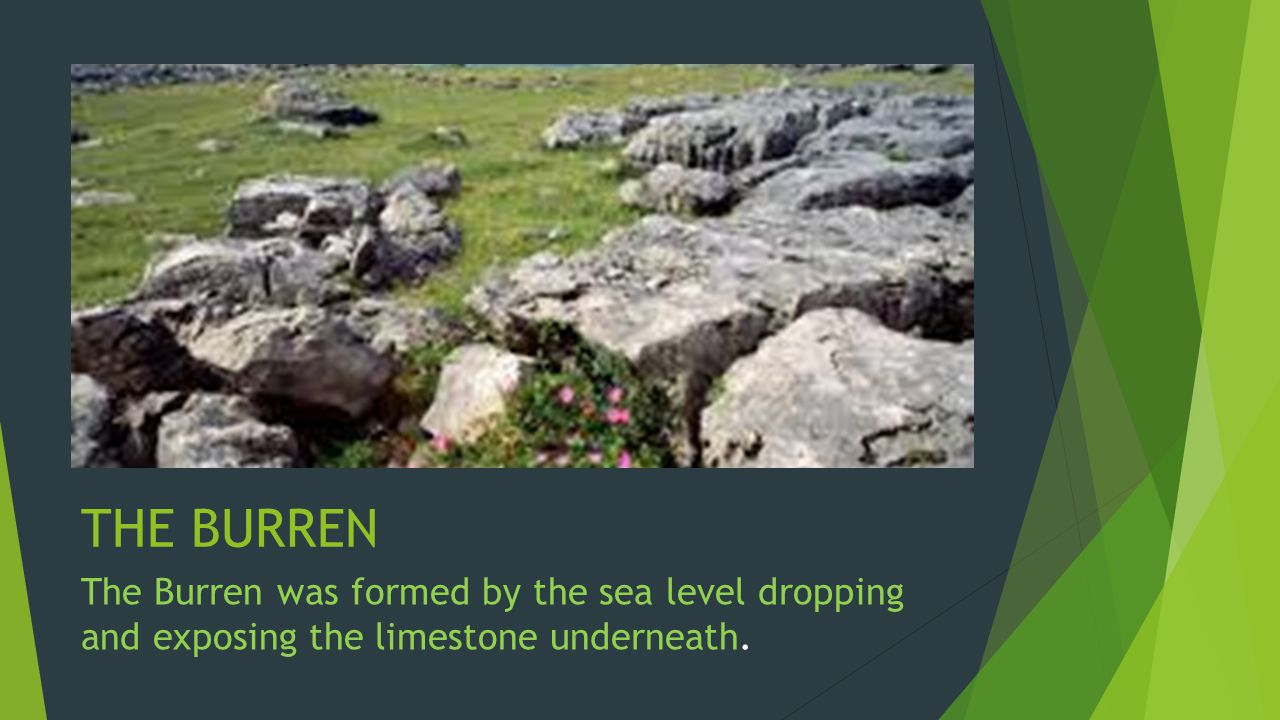 THE BURREN The Burren was formed by the sea level dropping and exposing the limestone underneath.