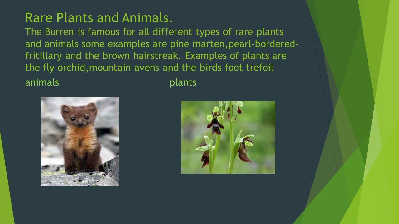 Rare Plants and Animals.