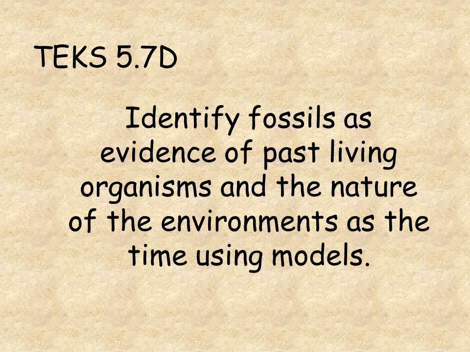 What can you infer about an animal from a fossil of its jawbone?