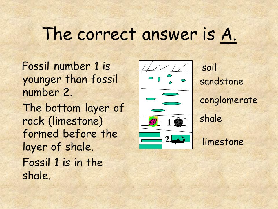 The correct answer is A. Fossil number 1 is younger than fossil number 2. The bottom layer of rock (limestone) formed before the layer of shale. Fossi