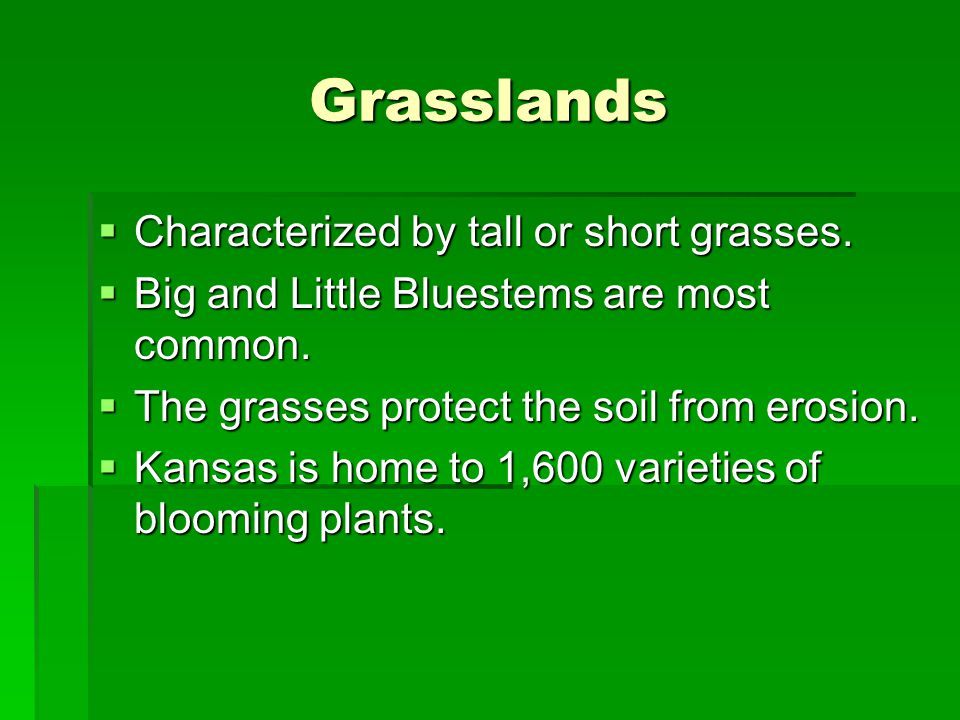 Grasslands  Characterized by tall or short grasses.  Big and Little Bluestems are most common.  The grasses protect the soil from erosion.  Kansas