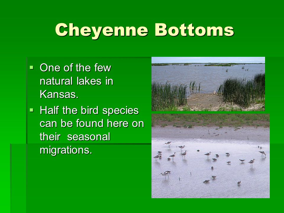 Cheyenne Bottoms  One of the few natural lakes in Kansas.  Half the bird species can be found here on their seasonal migrations.