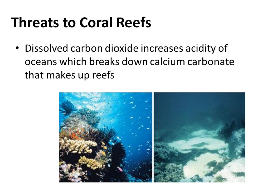Threats to Coral Reefs Dissolved carbon dioxide increases acidity of oceans which breaks down calcium carbonate that makes up reefs