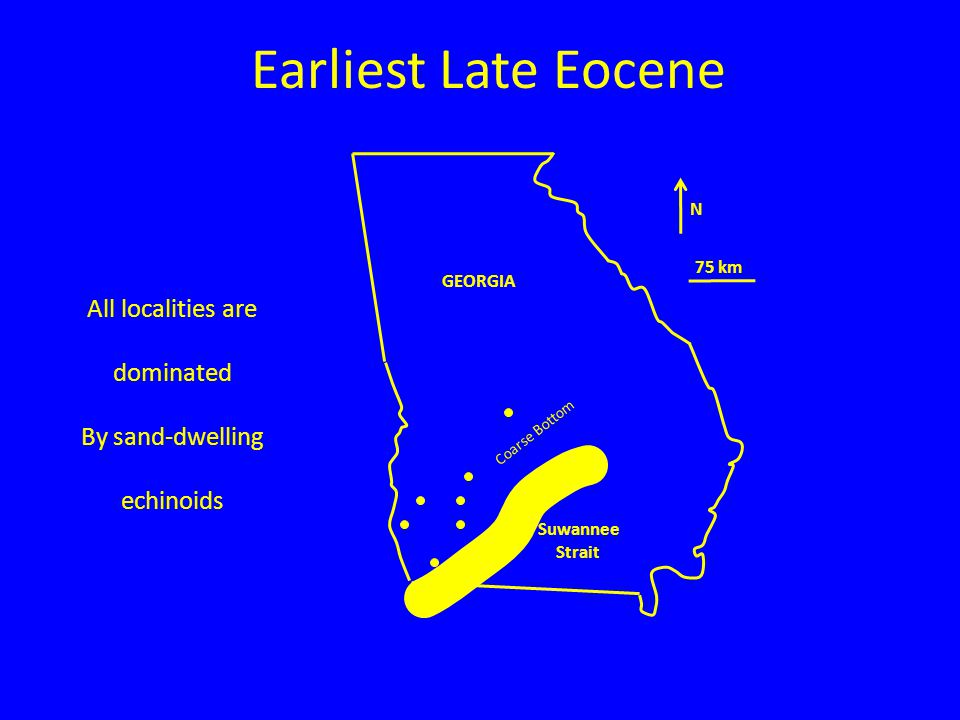 Earliest Late Eocene N 75 km GEORGIA Suwannee Strait All localities are dominated By sand-dwelling echinoids Coarse Bottom