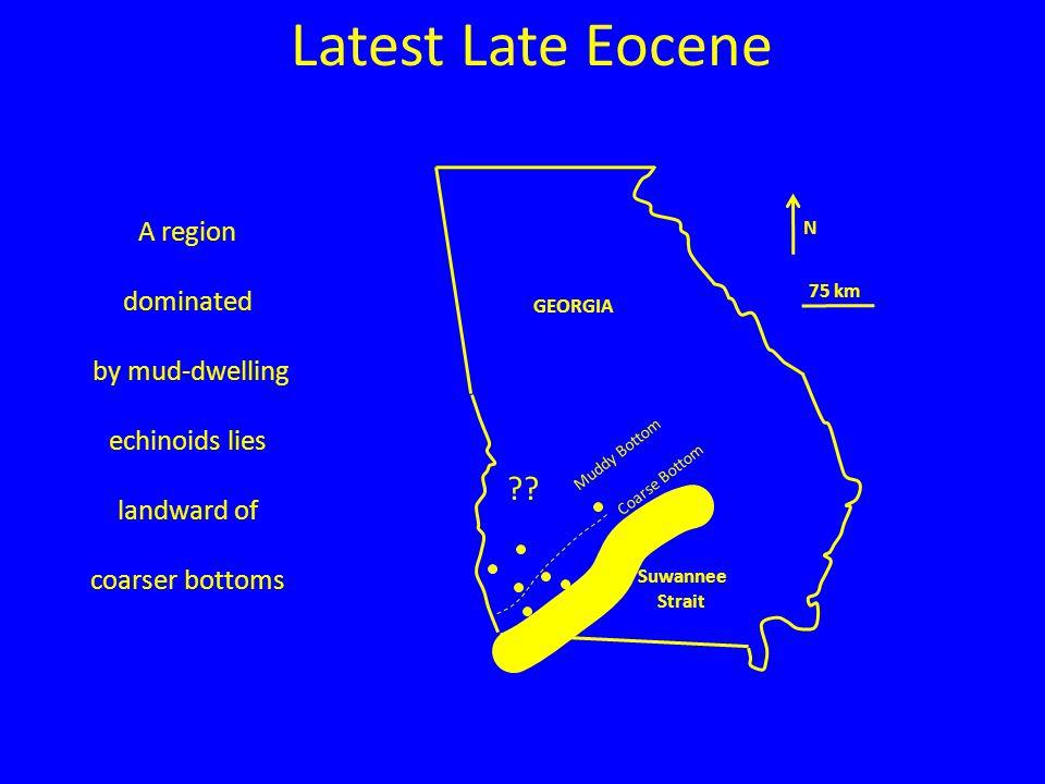 N 75 km GEORGIA Suwannee Strait Latest Late Eocene Muddy Bottom Coarse Bottom A region dominated by mud-dwelling echinoids lies landward of coarser bottoms