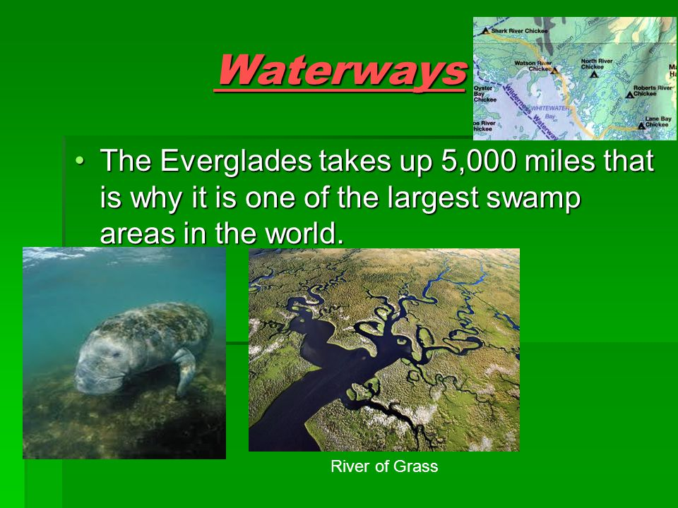 Waterway Details  Swamp -one of the swamps in the Everglades is Big Cypress -40 miles wide, 100 miles long, 3 inches deep  Canals -Canals flow through Lake Okeechobee -12'0''  Rivers -One of the rivers is called Shark River Chickee