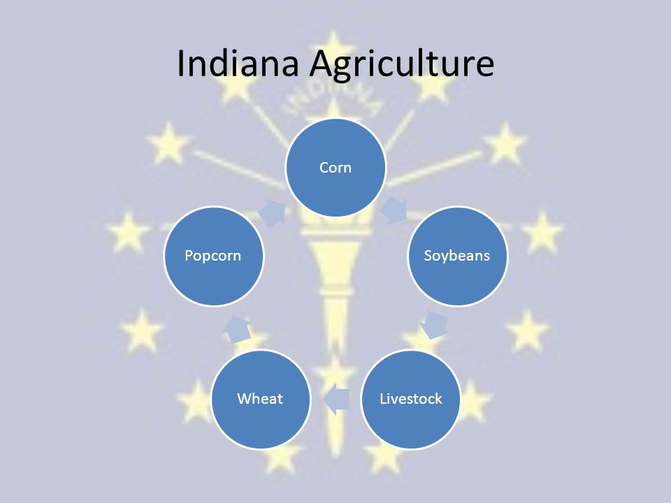 Indiana Agriculture Corn Soybeans LivestockWheat Popcorn