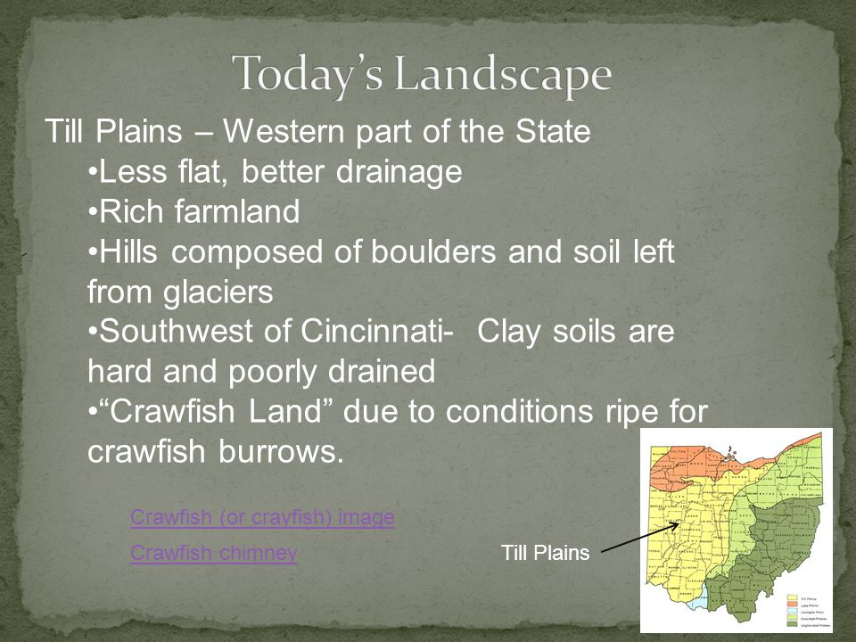 Till Plains – Western part of the State Less flat, better drainage Rich farmland Hills composed of boulders and soil left from glaciers Southwest of Cincinnati- Clay soils are hard and poorly drained Crawfish Land due to conditions ripe for crawfish burrows.