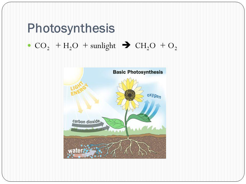 Photosynthesis CO 2 + H 2 O + sunlight  CH 2 O + O 2