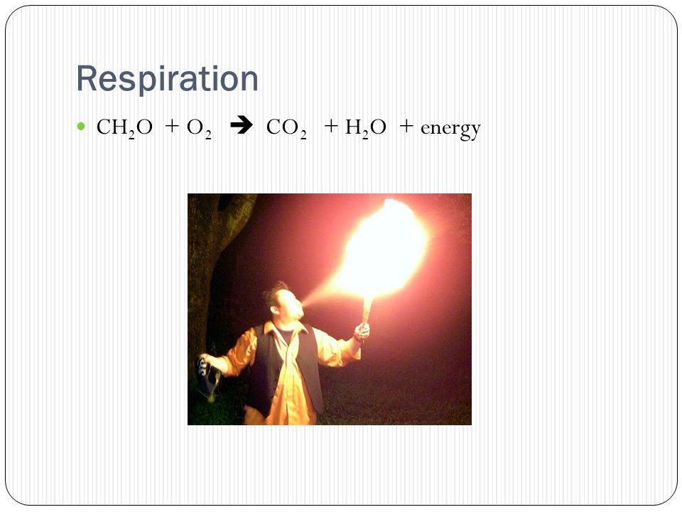 Respiration CH 2 O + O 2  CO 2 + H 2 O + energy