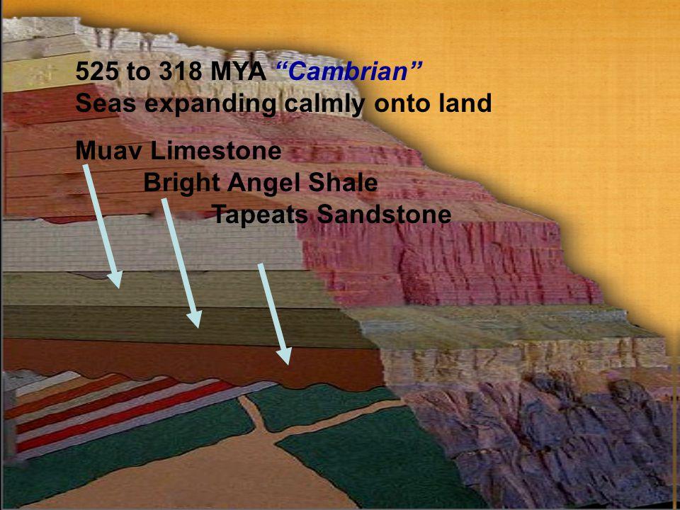 525 to 318 MYA Cambrian Seas expanding calmly onto land Muav Limestone Bright Angel Shale Tapeats Sandstone