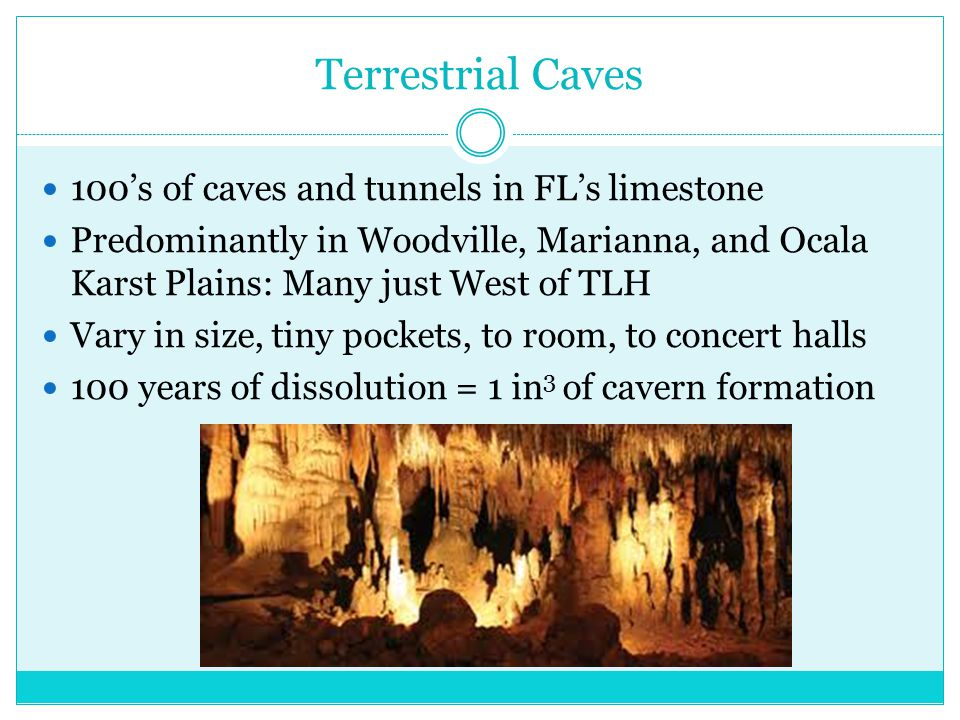 Terrestrial Caves 100's of caves and tunnels in FL's limestone Predominantly in Woodville, Marianna, and Ocala Karst Plains: Many just West of TLH Vary in size, tiny pockets, to room, to concert halls 100 years of dissolution = 1 in 3 of cavern formation