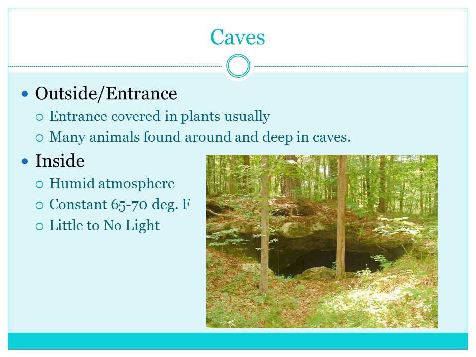 Caves Outside/Entrance  Entrance covered in plants usually  Many animals found around and deep in caves.