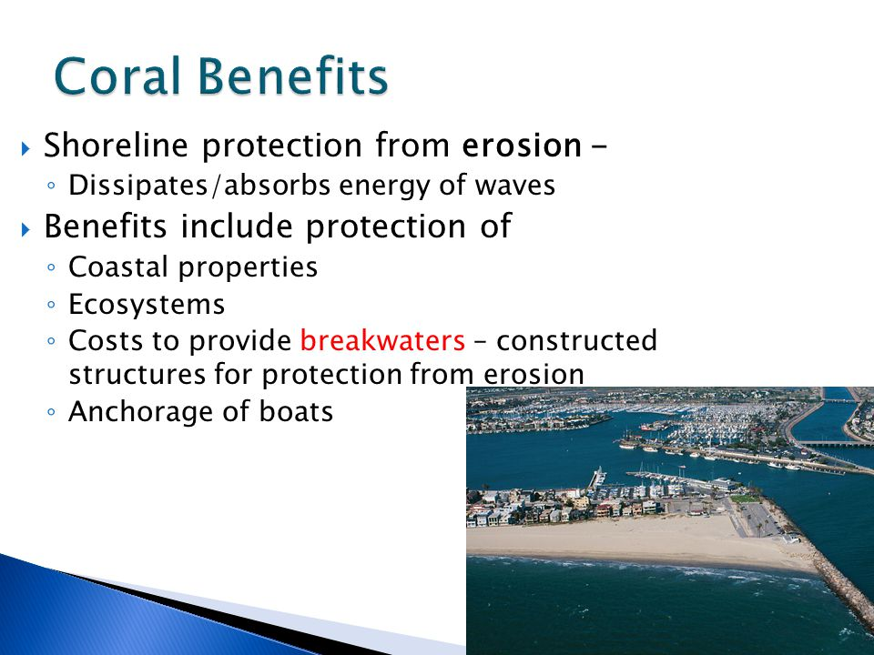  Shoreline protection from erosion - ◦ Dissipates/absorbs energy of waves  Benefits include protection of ◦ Coastal properties ◦ Ecosystems ◦ Costs to provide breakwaters – constructed structures for protection from erosion ◦ Anchorage of boats