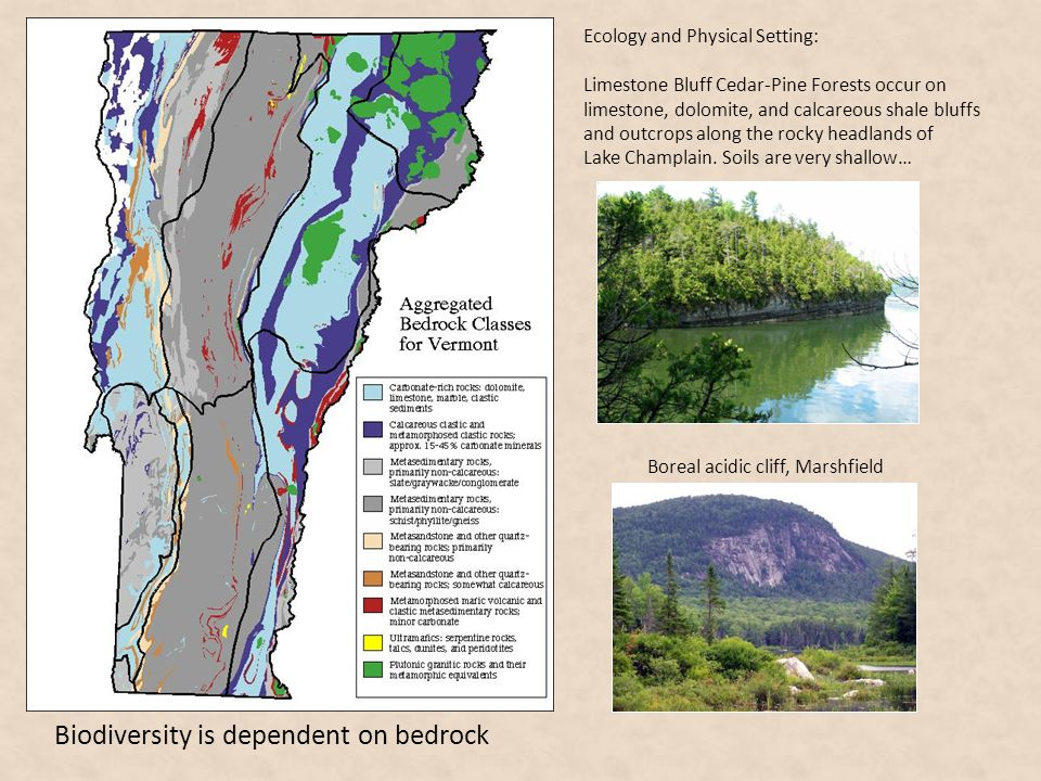 Biodiversity is dependent on bedrock Boreal acidic cliff, Marshfield Ecology and Physical Setting: Limestone Bluff Cedar-Pine Forests occur on limesto
