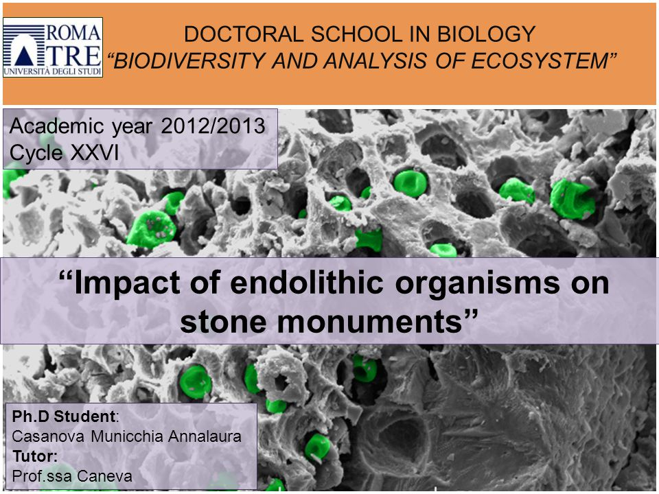 DOCTORAL SCHOOL IN BIOLOGY BIODIVERSITY AND ANALYSIS OF ECOSYSTEM Impact of endolithic organisms on stone monuments Academic year 2012/2013 Cycle XXVI Ph.D Student: Casanova Municchia Annalaura Tutor: Prof.ssa Caneva