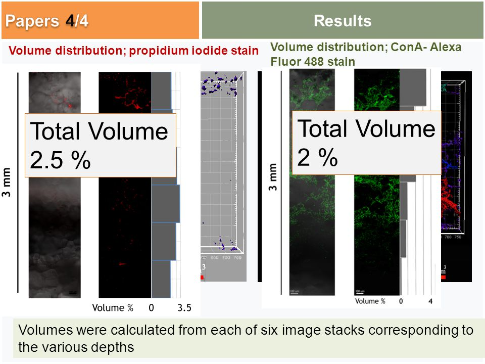 Results Total Volume 2.5 % Total Volume 2 % Volumes were calculated from each of six image stacks corresponding to the various depths Volume distribution; propidium iodide stain Volume distribution; ConA- Alexa Fluor 488 stain