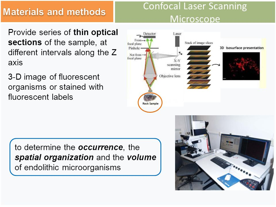 Confocal Laser Scanning Microscope to determine the occurrence, the spatial organization and the volume of endolithic microorganisms Provide series of thin optical sections of the sample, at different intervals along the Z axis 3-D image of fluorescent organisms or stained with fluorescent labels