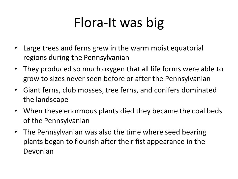 Flora-It was big Large trees and ferns grew in the warm moist equatorial regions during the Pennsylvanian They produced so much oxygen that all life forms were able to grow to sizes never seen before or after the Pennsylvanian Giant ferns, club mosses, tree ferns, and conifers dominated the landscape When these enormous plants died they became the coal beds of the Pennsylvanian The Pennsylvanian was also the time where seed bearing plants began to flourish after their fist appearance in the Devonian