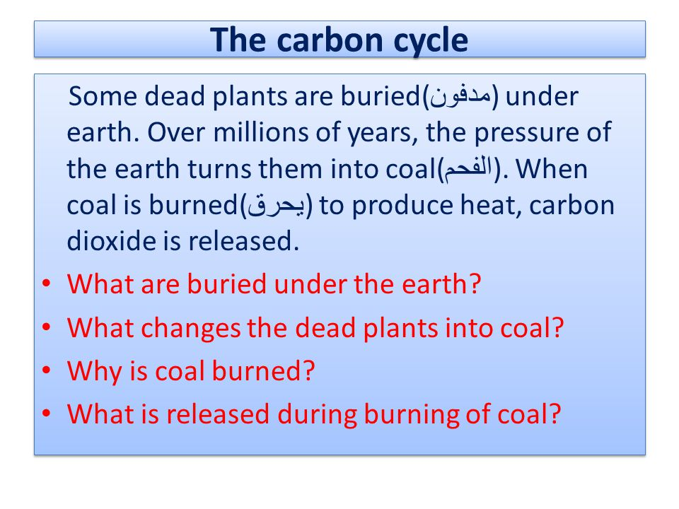 The carbon cycle Some dead plants are buried( مدفون ) under earth. Over millions of years, the pressure of the earth turns them into coal( الفحم ). Wh