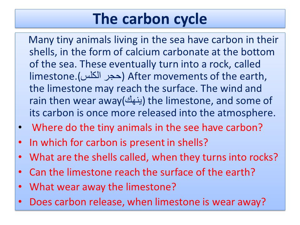 The carbon cycle Many tiny animals living in the sea have carbon in their shells, in the form of calcium carbonate at the bottom of the sea. These eve