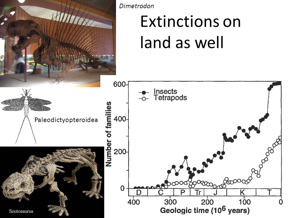 Extinctions on land as well Paleodictyopteroidea Dimetrodon