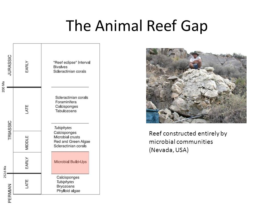 The Animal Reef Gap Reef constructed entirely by microbial communities (Nevada, USA)