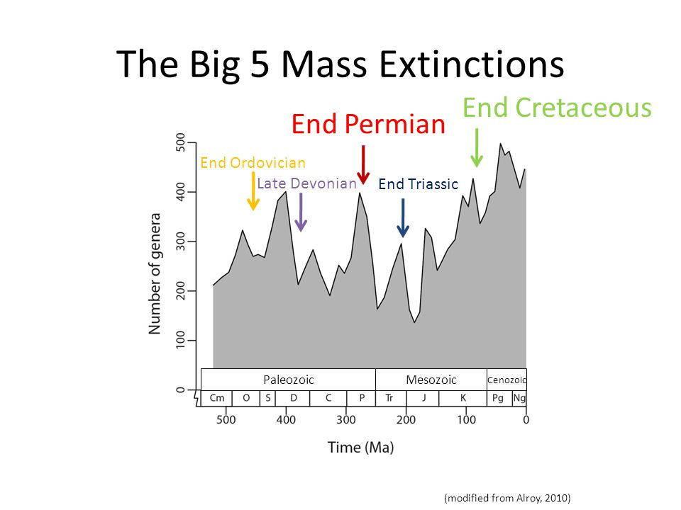 End Cretaceous Mass Extinction K-T event 50% of marine species 47% of marine genera (Raup 1979, Erwin 1993, Hallam & Wignall 1997)