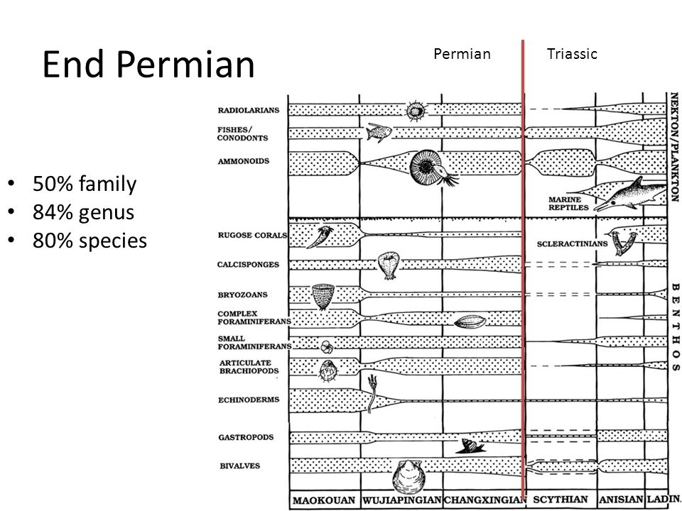 End Permian 50% family 84% genus 80% species PermianTriassic