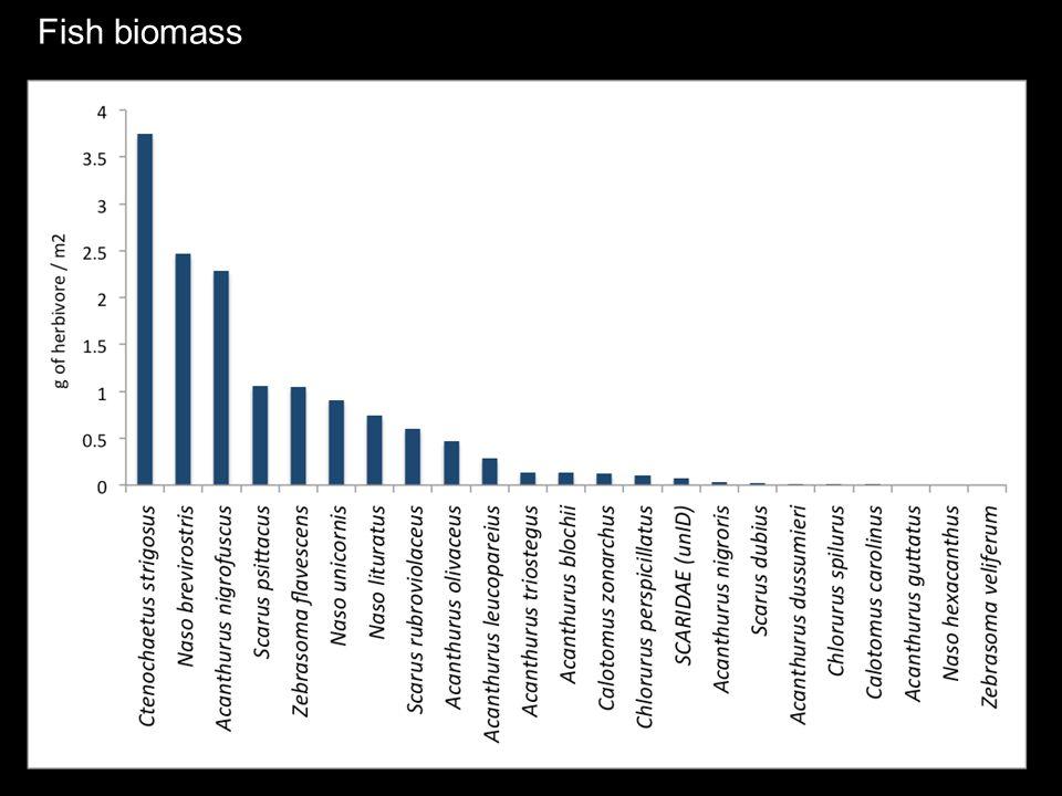 Fish biomass